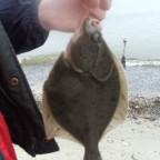 ..der erste Fisch