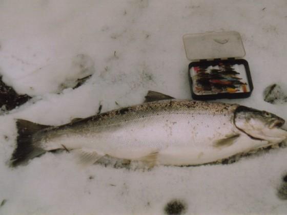 Wintermefo,62cm-3,64kg  gefangen febr.1991
