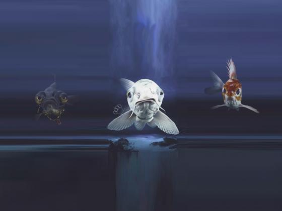 Coole Fische