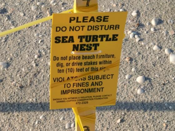 Turtlewarnung